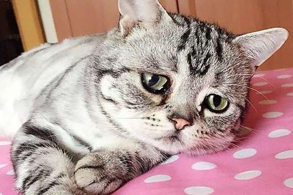 Мини-руководство для владельцев кошек. Что должен знать каждый хозяин?