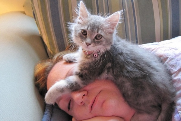 Почему кошки спят на человеке? Опасно ли это?